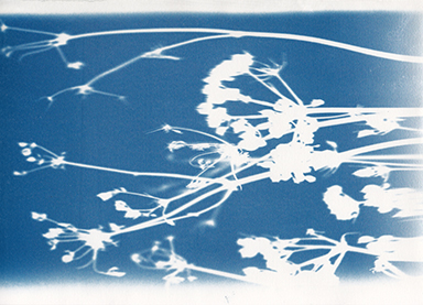 equinox cyanotypes seeds 2015s