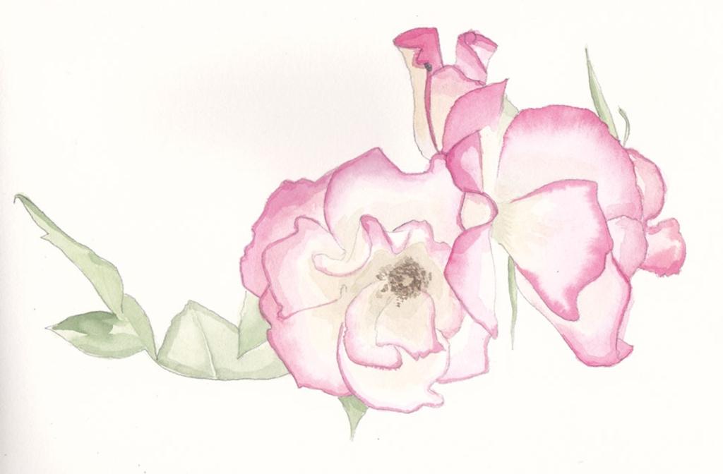Rose-3s